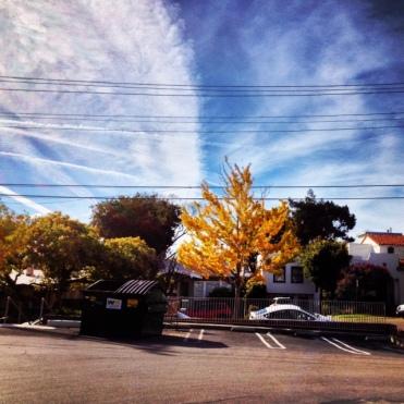 Gingko inspired Clouds