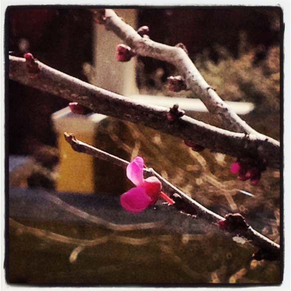 What better example of hope than a tiny brave bud in the middle of Winter.