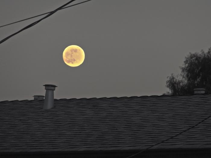 Sharp Rabbit  in the Moon