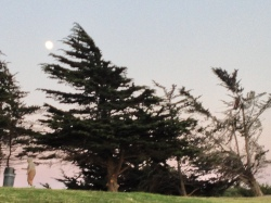 Supper Full Moon In cyprus tree