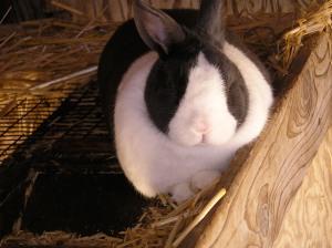 Happy Rabbit Day!
