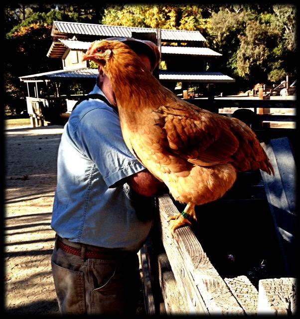 Zombi Chicken man
