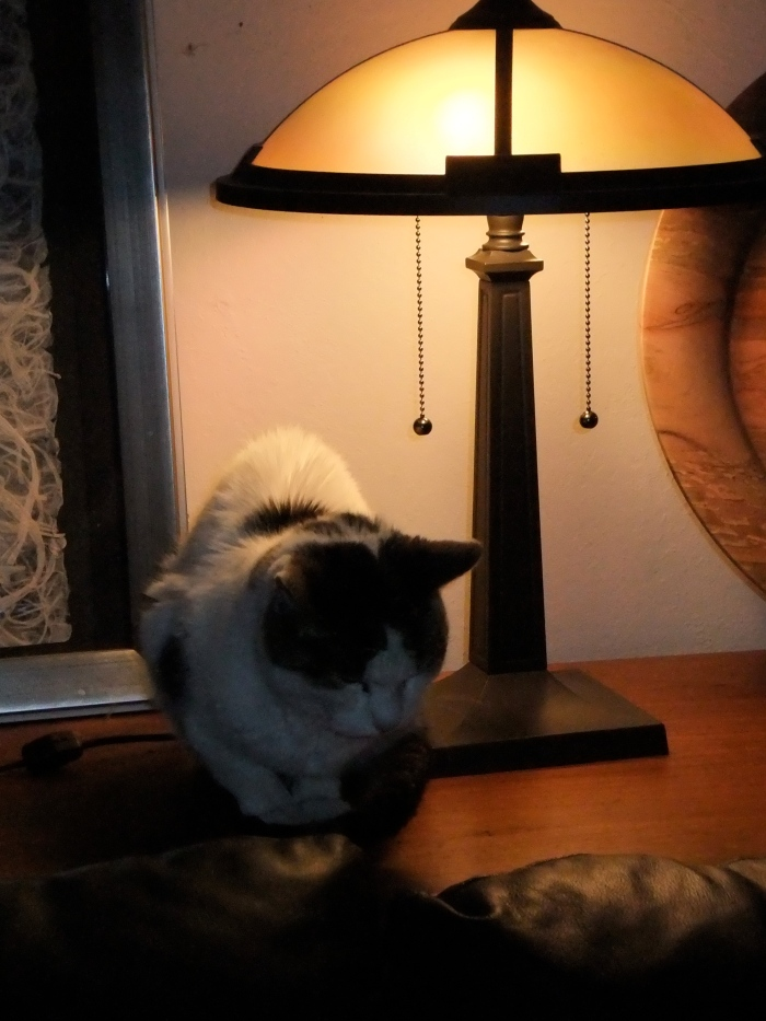Cat and reading light