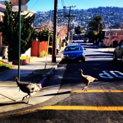 Local street walkers