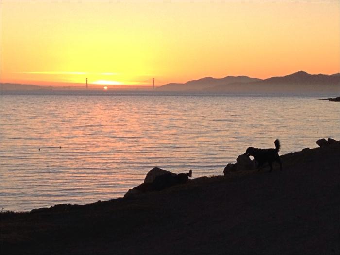 Winter solstice Sunseting Through Golden Gate Bridge