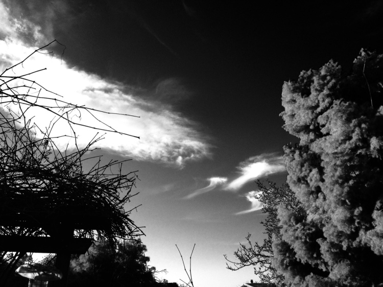Clouds and arbor