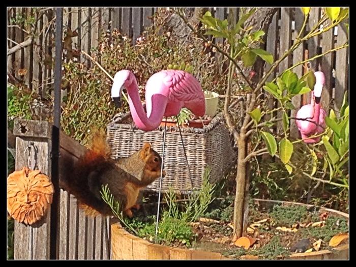 Squirrel and Flamingos