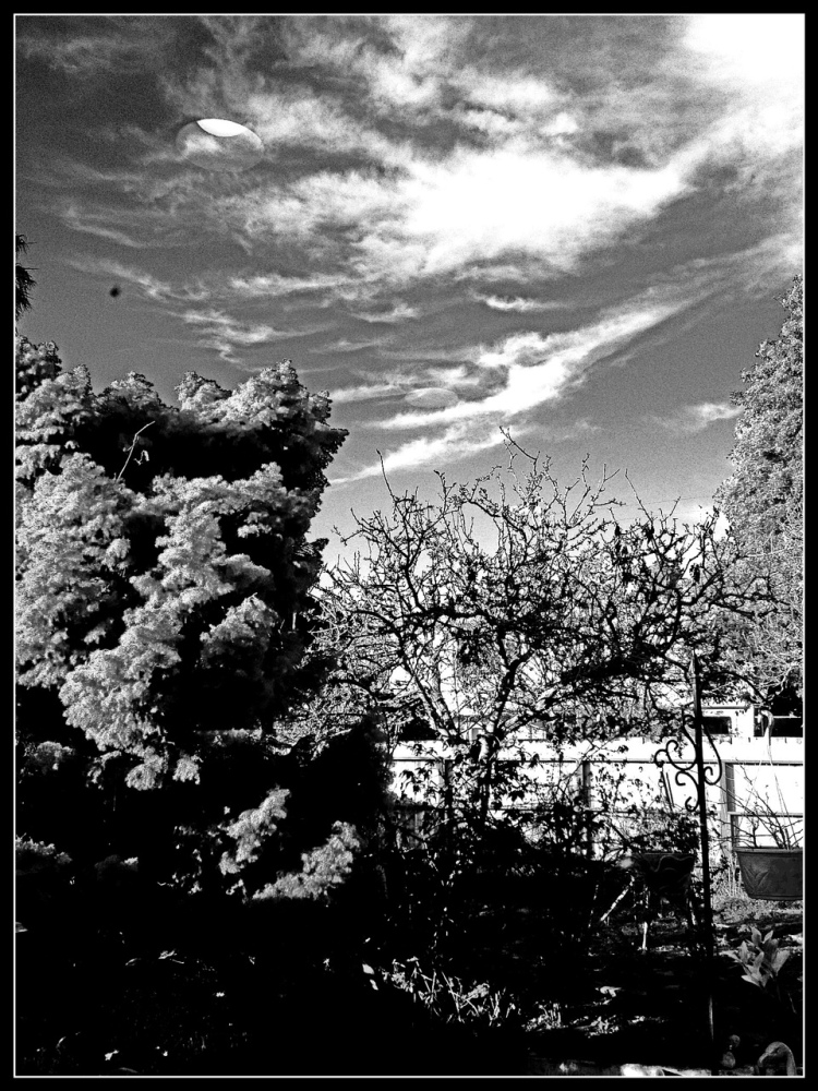 Clous and cloud tree