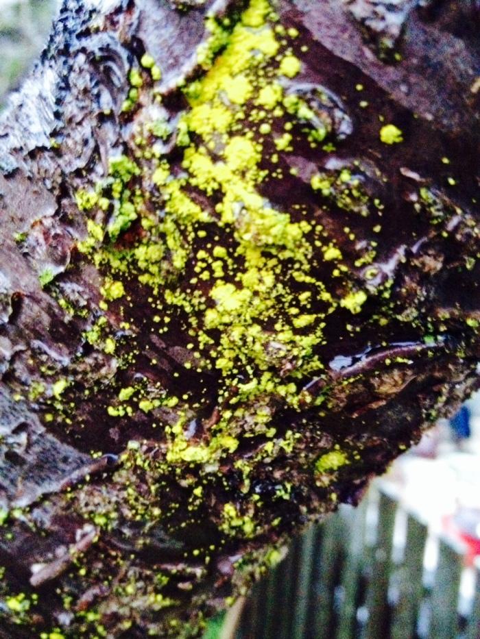 Moss on tree truck