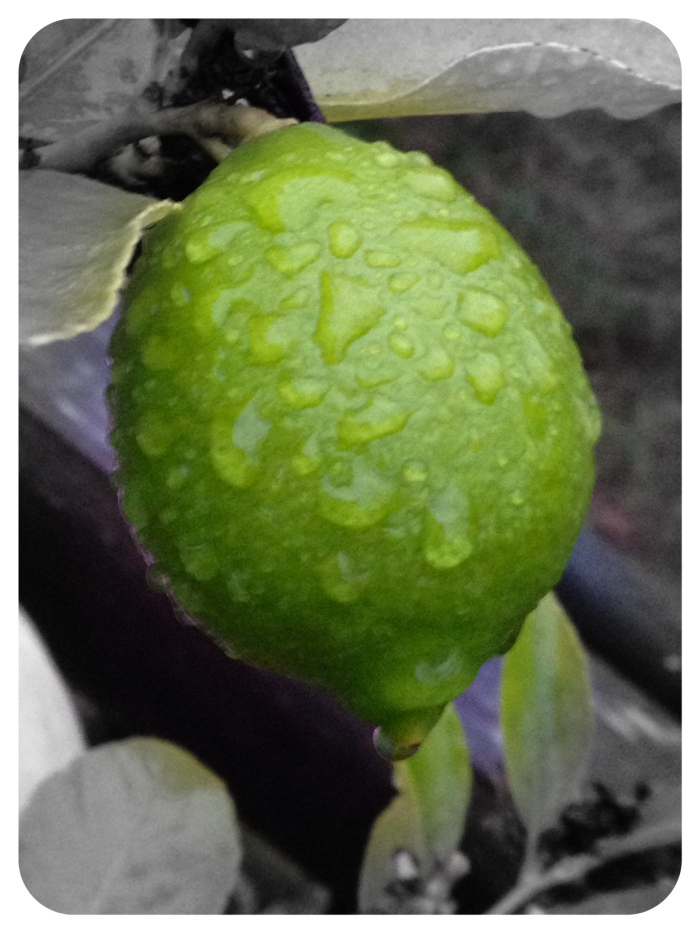 Rain drops on lime