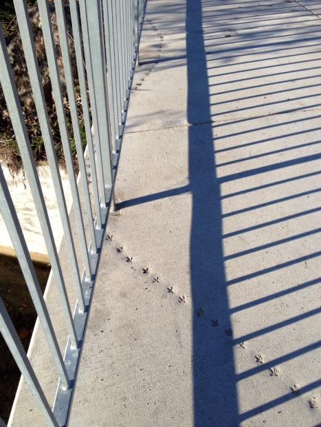 4. Bird tracks