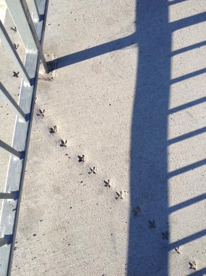3. Bird tracks
