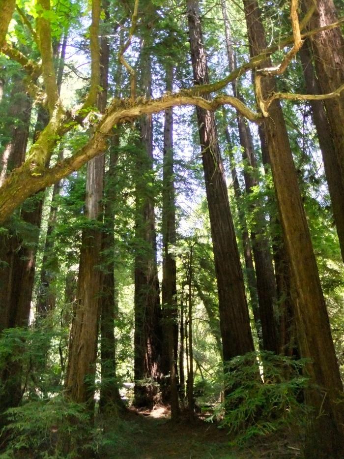 Muir Woods Fugi Camera