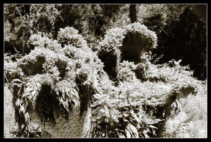 Planimals at the Bancroft Garden
