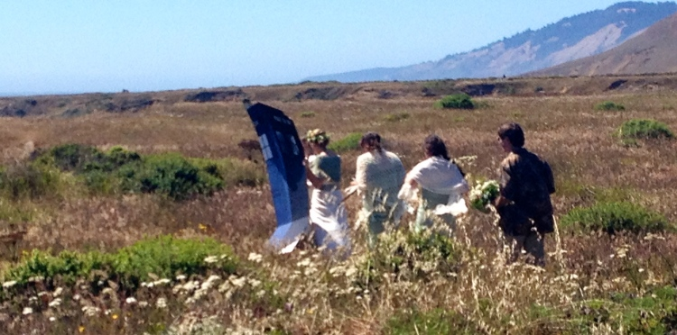 A walk through Summer grasses Before the Wedding