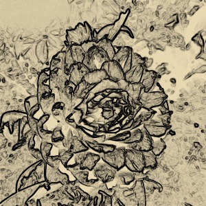 Thistle etching