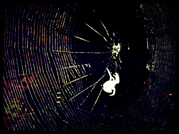 Spider in the night