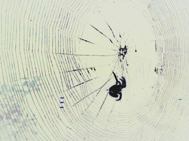 Spider revers image