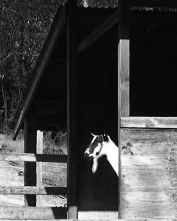 Mondrian Goat