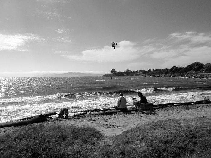 Wind surfer, Mount Tam and dogs with family