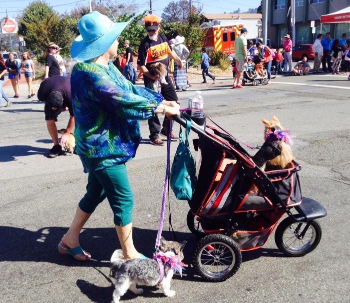 Pups on wheels