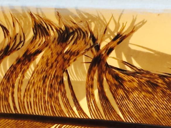 Sun lit feather