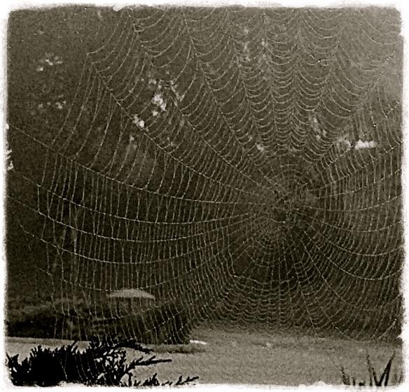 5-Web