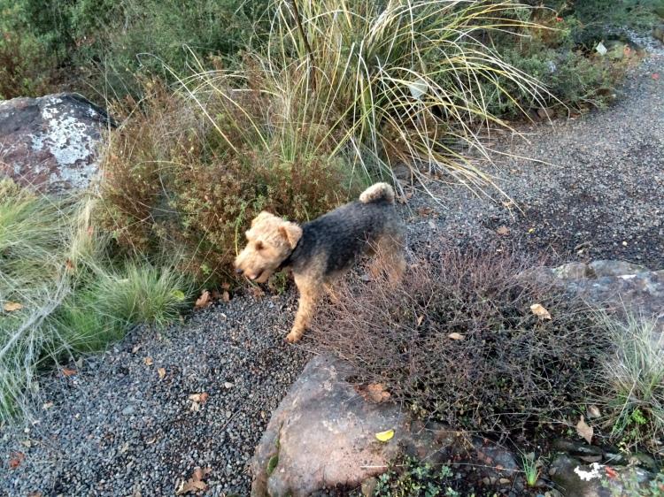 Pup on path