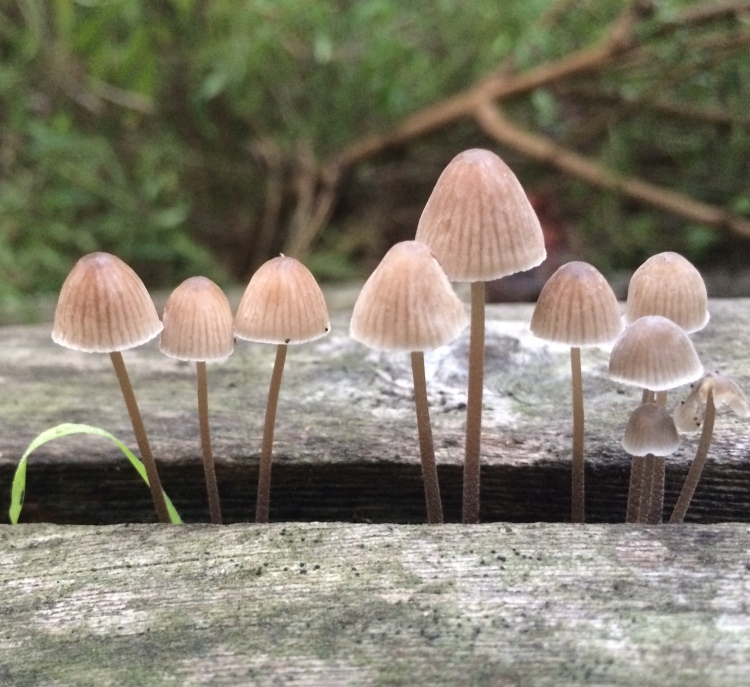 Stand of Mushrooms Today