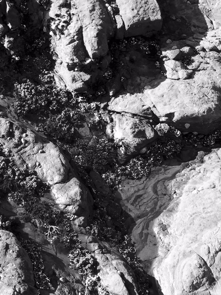 Pt. Lobos tide pool