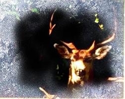 Frosty the Deer