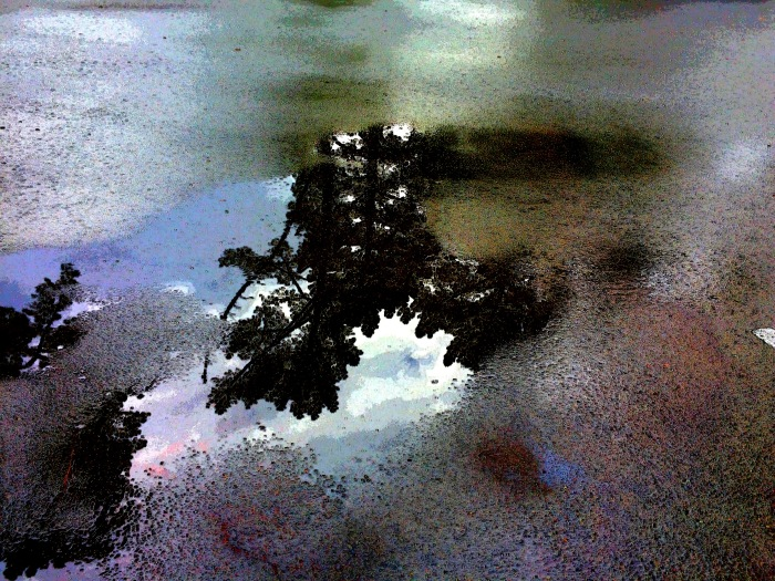 Pine reflected in puddle