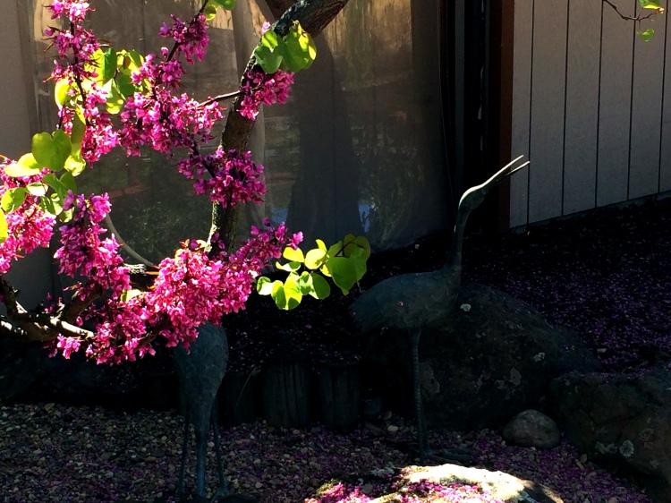 4-Crave in the Bonsai Garden