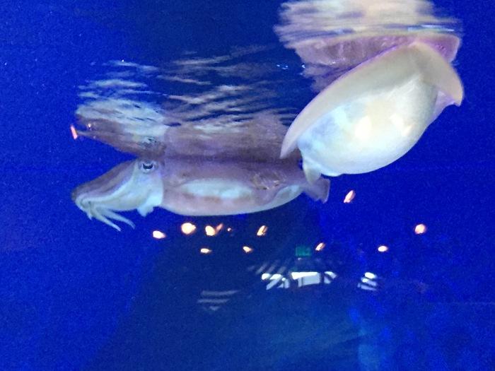 Smiling Cuddle Fish