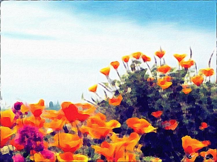 City poppies