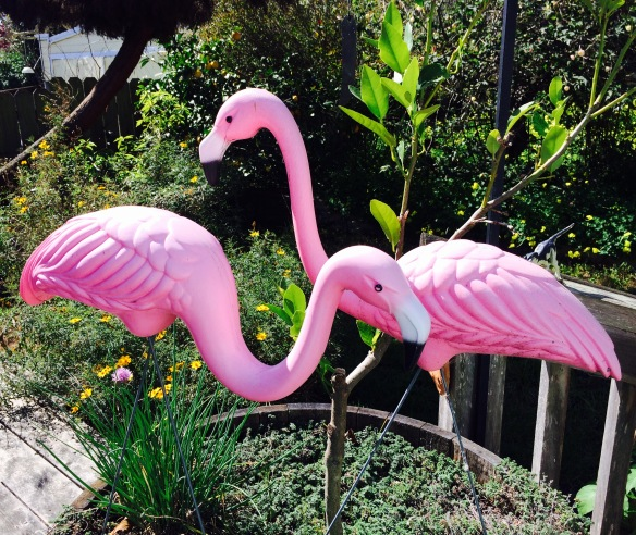 Of Course This Challenge would not be Complete without the Resident Pink Flamingos