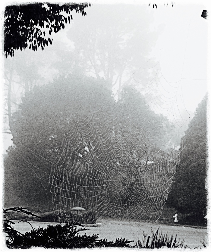 Web and fog