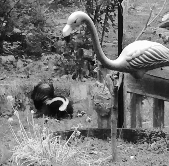 Skunk and Flamingo