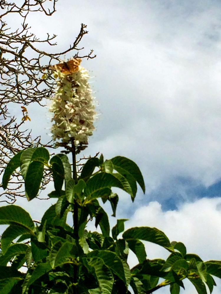 Odd volunteer flower-Butterfly Bush?