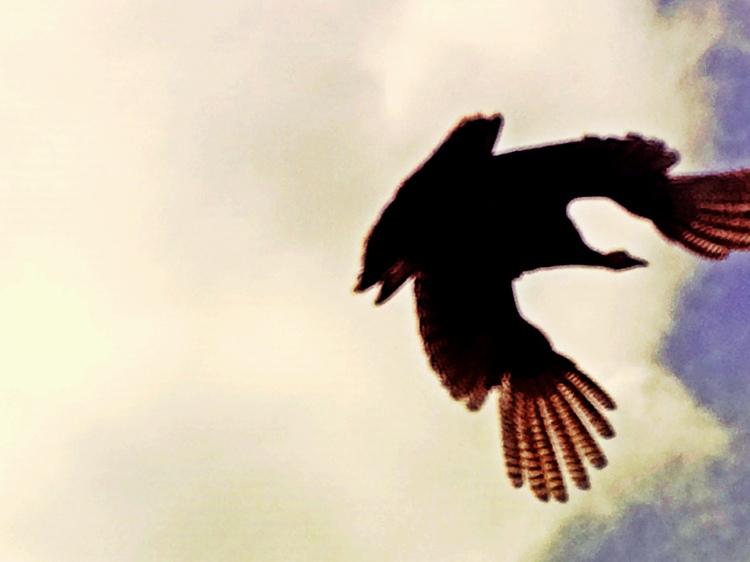 2-In Flight