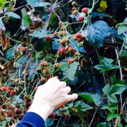 Berry Picking A delicate art