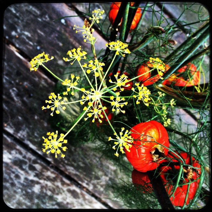 Anise flower and little pumpkins from overhead
