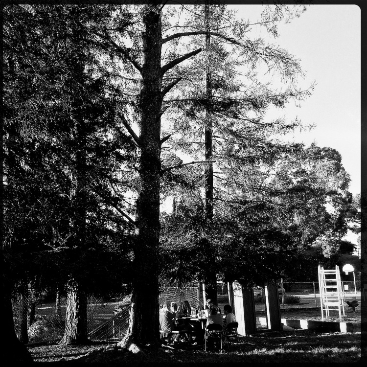 Picnic Under the Redwoods Hannah Lens