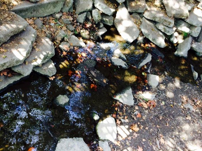 Strawberry Creek