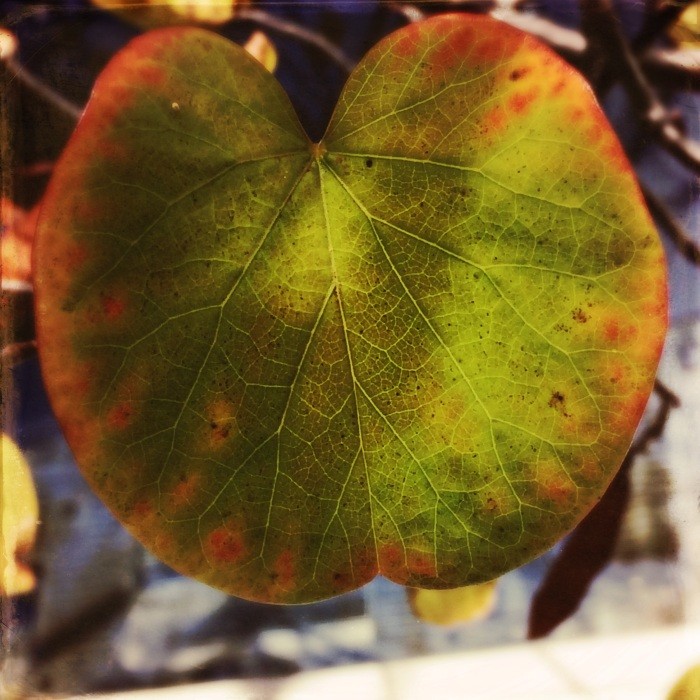 Redbud Leaf Hipstamatic Edit
