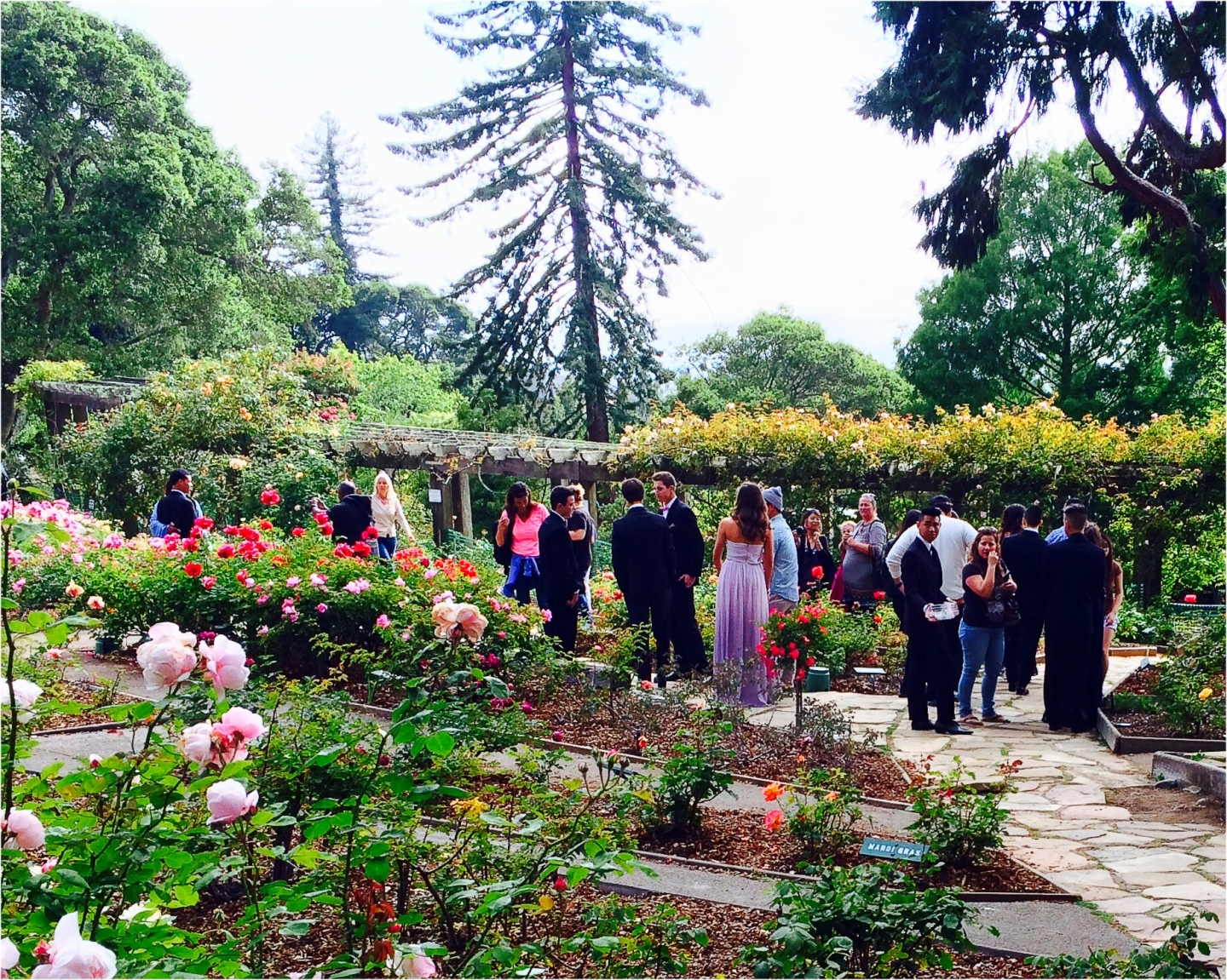 Gathering among the roses