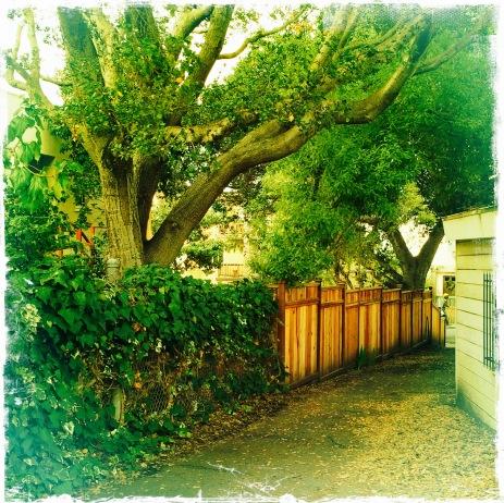 Walk on a leafy path
