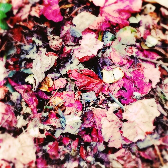 Leaf pile i