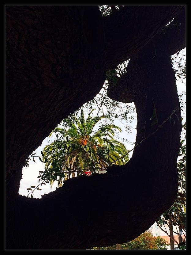 Palm framed by Olive Trunk