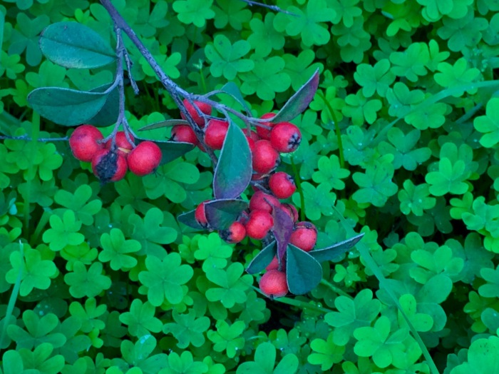 Ceres Berries